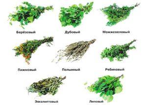 «Заготовка веников для бани: сроки и особенности» фото - zag venikov 5 300x214