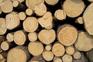 «Баня на дровах: особенности бани и выбор дров» фото - banya na drovah 8 300x200