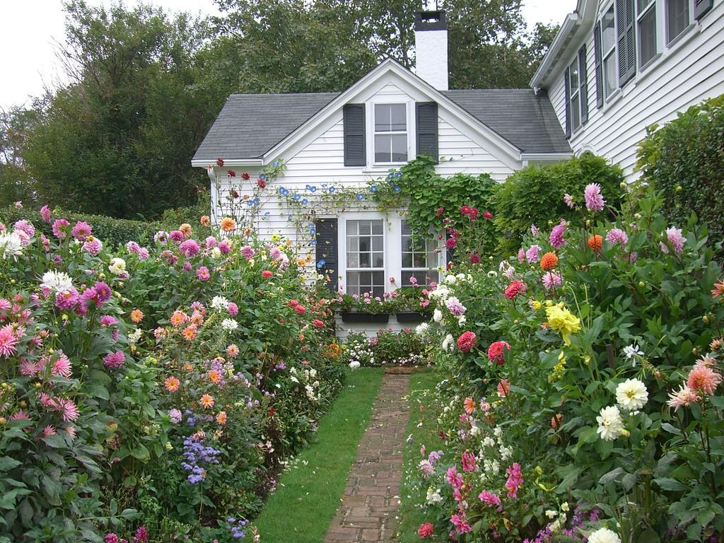 цветах в фото весь участок садовый