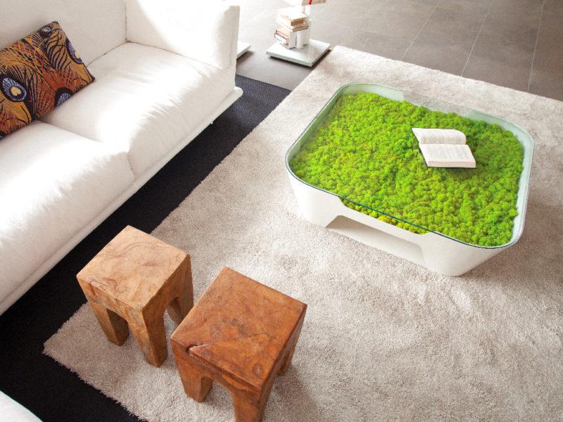 «Декоративный мох: разновидности, где применяется» фото - 1 2 800x600