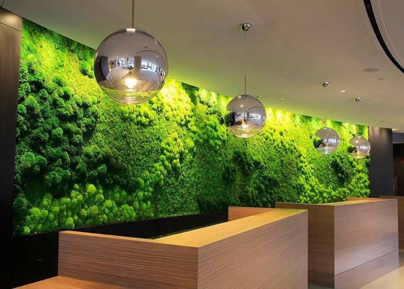 «Декоративный мох: разновидности, где применяется» фото - 11 1 800x572