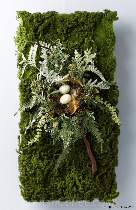 «Декоративный мох: разновидности, где применяется» фото - 12 2