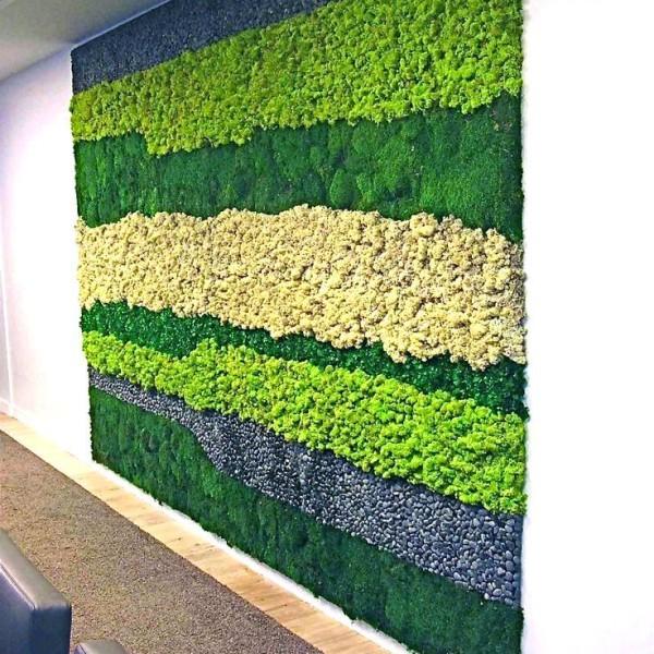 «Декоративный мох: разновидности, где применяется» фото - 13 1