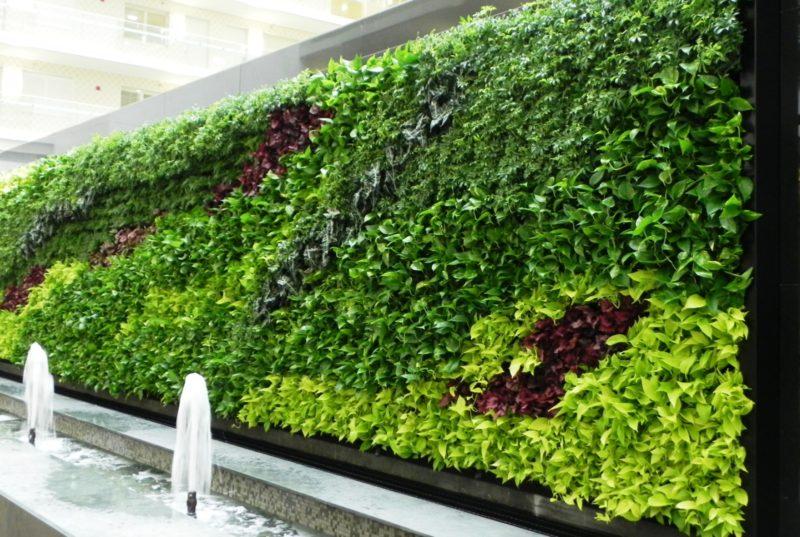 «Вертикальное озеленение на дачном участке» фото - 14 1 800x537