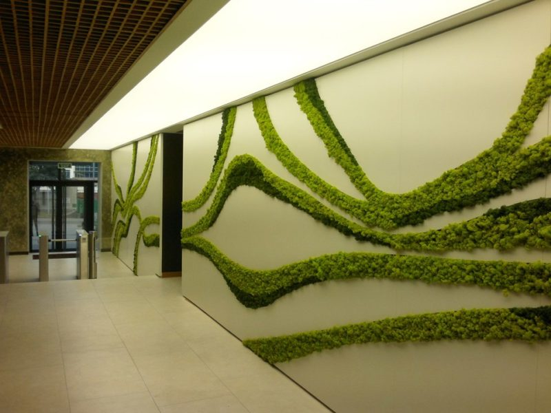 «Декоративный мох: разновидности, где применяется» фото - 16 2 800x600