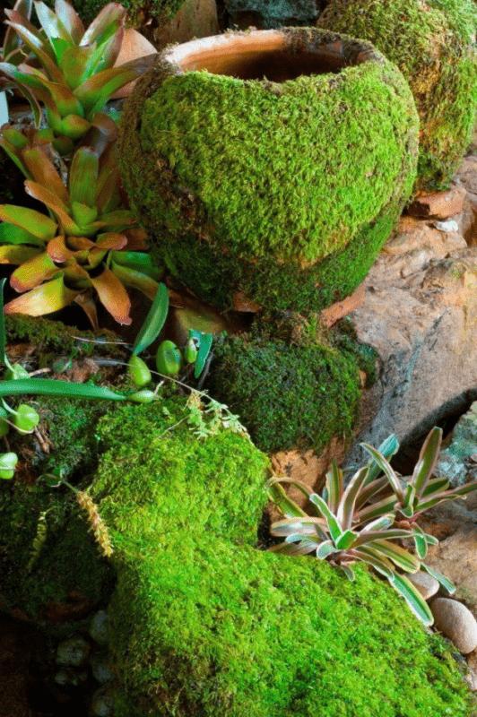 «Декоративный мох: разновидности, где применяется» фото - 16 532x800
