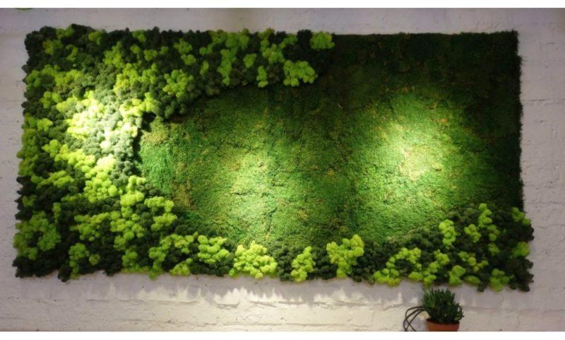 «Декоративный мох: разновидности, где применяется» фото - 18 1 800x481