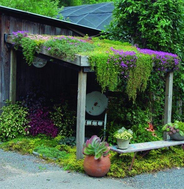 «Вертикальное озеленение на дачном участке» фото - 19