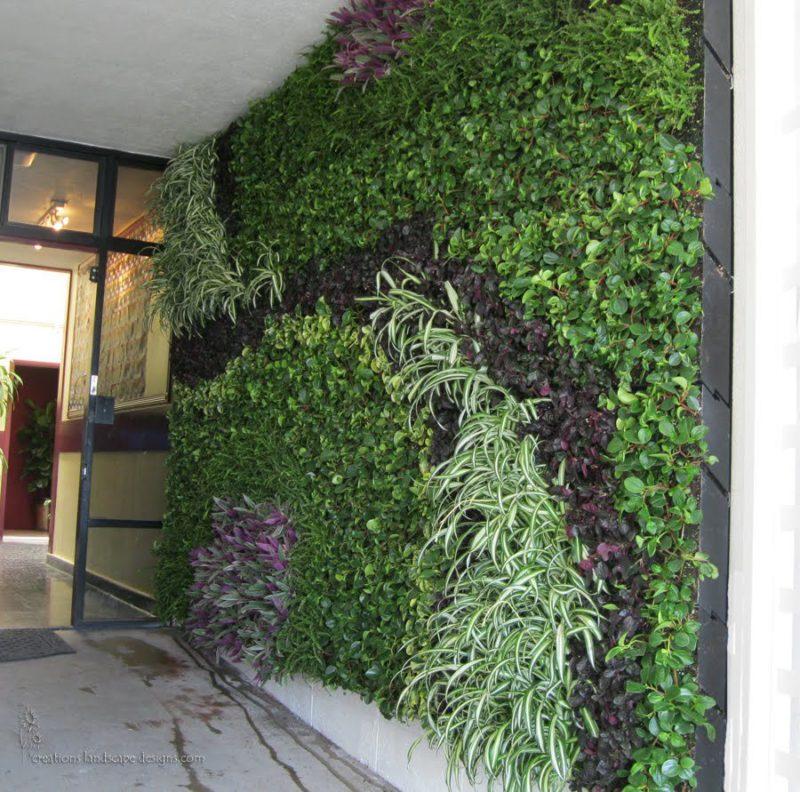 «Вертикальное озеленение на дачном участке» фото - 2 2 800x792