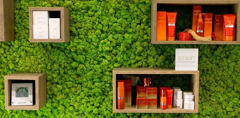 «Декоративный мох: разновидности, где применяется» фото - 2 3 800x395