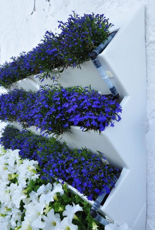 «Вертикальное озеленение на дачном участке» фото - 20 539x800