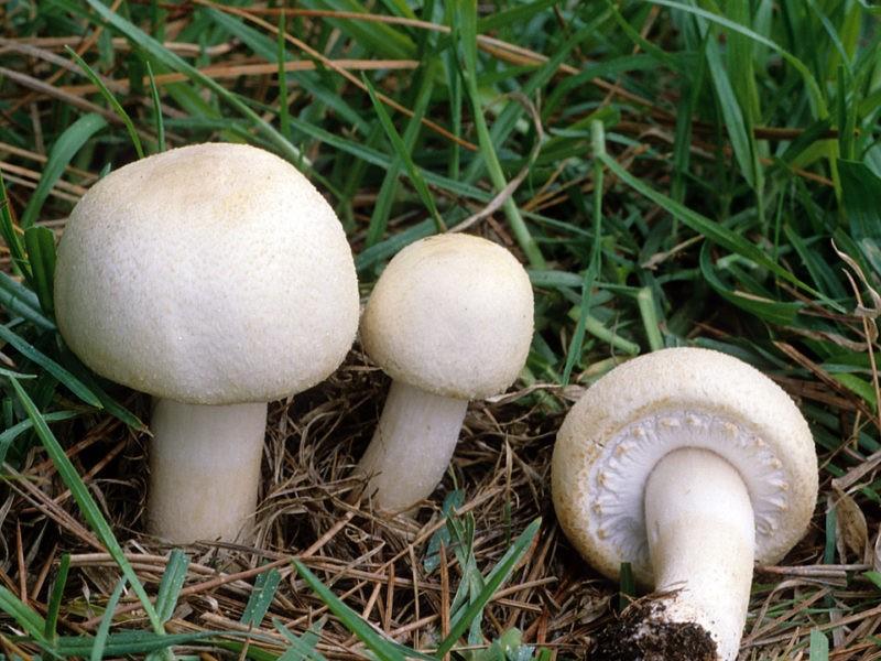 «Сколько и как правильно нужно сушить грибы?» фото - 239 800x600