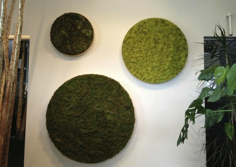 «Декоративный мох: разновидности, где применяется» фото - 4 2