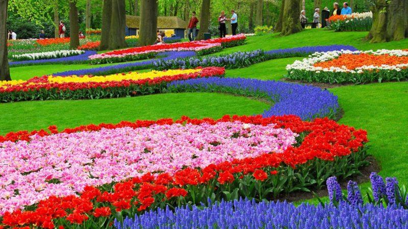 «Как правильно сделать клумбу для цветов» фото - 4482740 flower garden wallpapers jpg 800x450