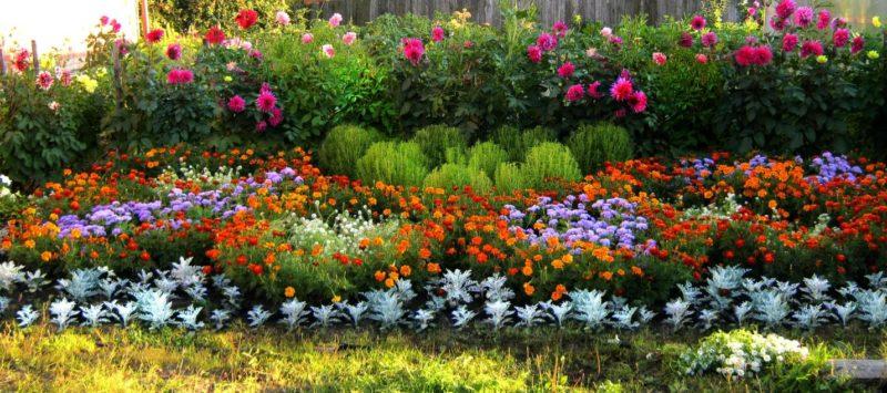 «Клумба для цветов своими руками» фото - 5 1 800x355
