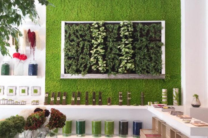 «Декоративный мох: разновидности, где применяется» фото - 5 3