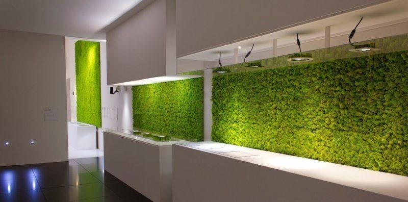«Декоративный мох: разновидности, где применяется» фото - 6 1 800x396