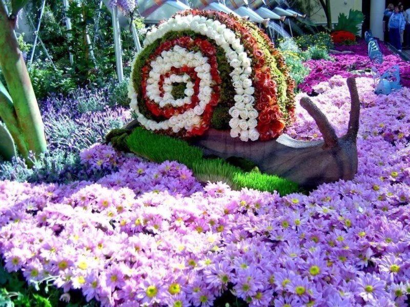 «Как правильно сделать клумбу для цветов» фото - CqCzaIaXYAE2Xm8 800x600