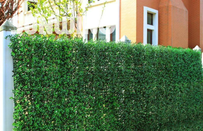 «Виды вьющихся растений для украшения забора на участке» фото - HTB1CSJBKXXXXXXsXFXXq6xXFXXXc 800x518