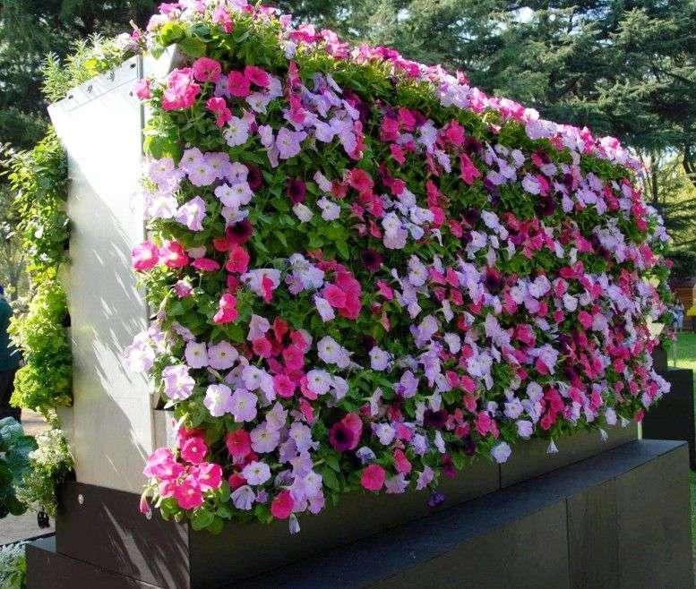 «Вертикальное озеленение на дачном участке» фото - Mobiwall Mifgs 2009 158crop e1450586909625