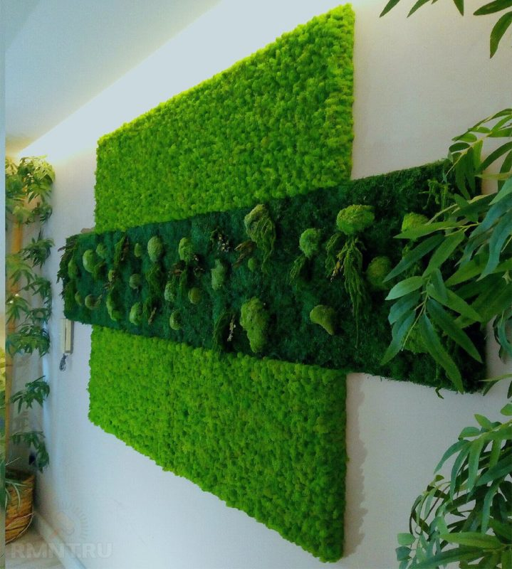 «Декоративный мох: разновидности, где применяется» фото - MpkFzhq3 719x800