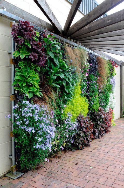 «Вертикальное озеленение на дачном участке» фото - Vertikalnoe ozelenenije 15