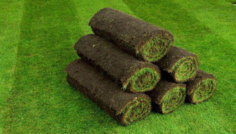 «Как правильно сделать газон на дачном и садовом участке» фото - chto takoe rulonnyj gazon 3 800x455