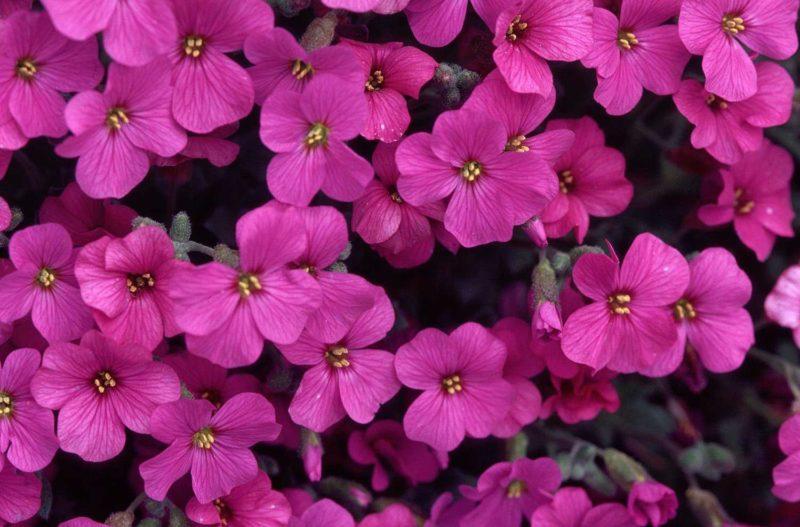 «Клумба для цветов своими руками» фото - fukpfupku 800x527