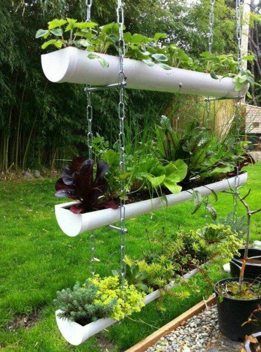 «Вертикальное озеленение на дачном участке» фото - igor5 11101721061806 10