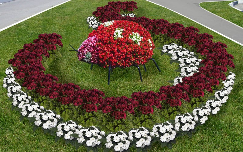 «Как правильно сделать клумбу для цветов» фото - landshaftnyj dizajn kak vybrat cvety dlya klumby 800x500