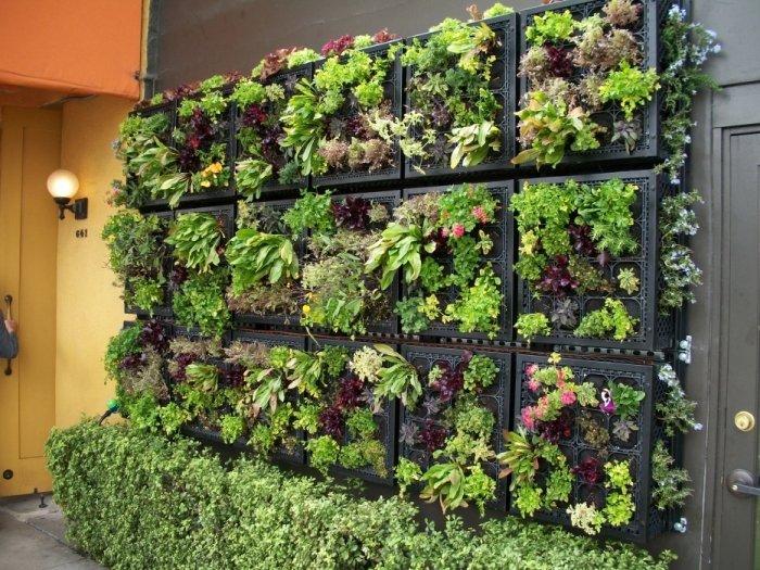 «Вертикальное озеленение на дачном участке» фото - modulnoe vertikalnoe ozelenenie