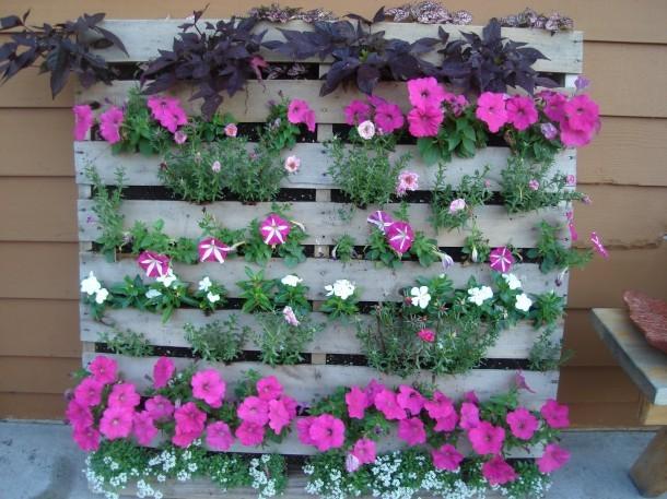 «Вертикальное озеленение на дачном участке» фото - pallet garden 2 610x457