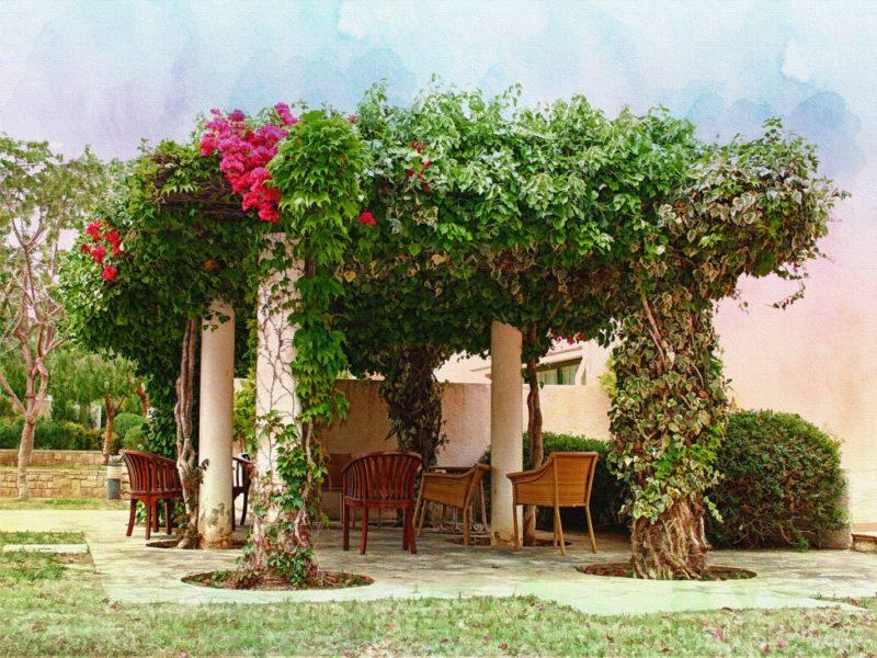«Вертикальное озеленение на дачном участке» фото - pergola naves dlya besedki s kilonami 800x600