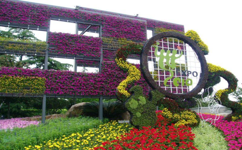 «Вертикальное озеленение на дачном участке» фото - poster 800x497