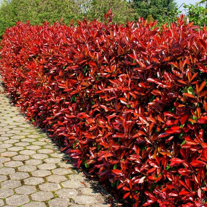 «Виды вьющихся растений для украшения забора на участке» фото - s1200 12