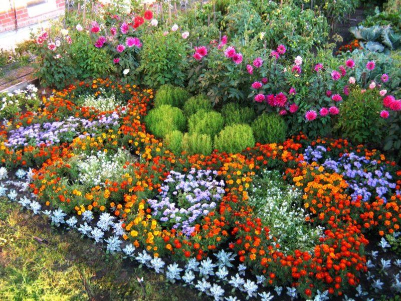 «Как правильно сделать клумбу для цветов» фото - s1200 3 800x600