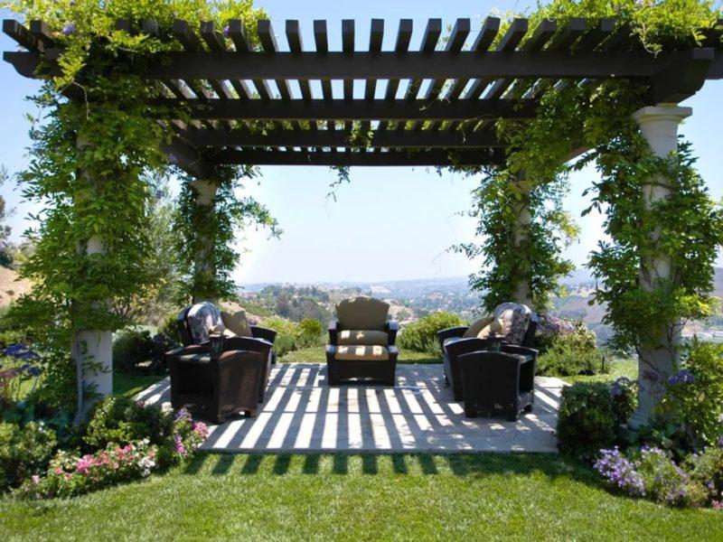 «Вертикальное озеленение на дачном участке» фото - s1200 8 800x600