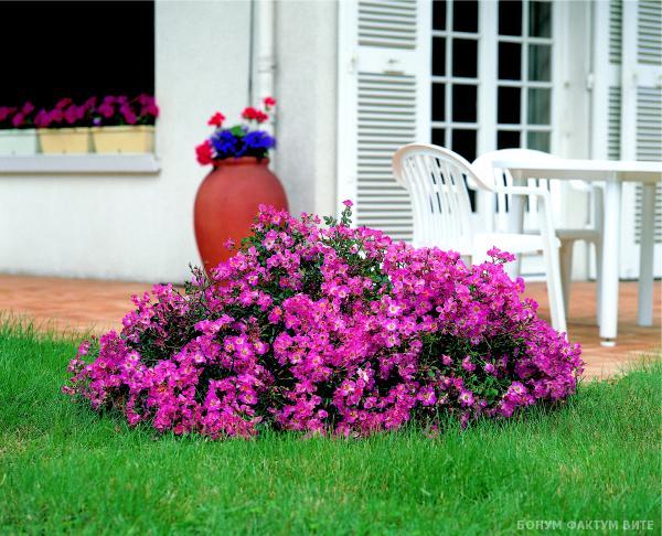 «Как правильно сделать клумбу для цветов» фото - soliter