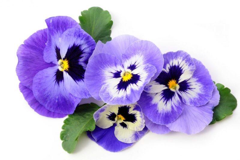 «Клумба для цветов своими руками» фото - thumb l 20687 800x532