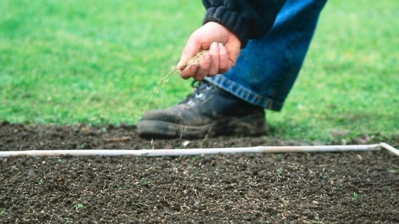 «Как правильно посеять газон: пошаговая инструкция и советы по уходу» фото - MAIN 000x000 800x449