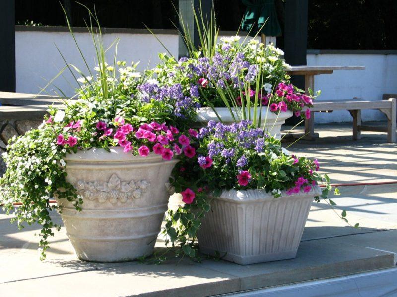 «Интересные идеи дизайна клумбы на даче» фото - flower pot ideas 07 800x600