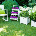 «Вьющиеся домашние растения - фото и название» фото - s1200 1 120x120