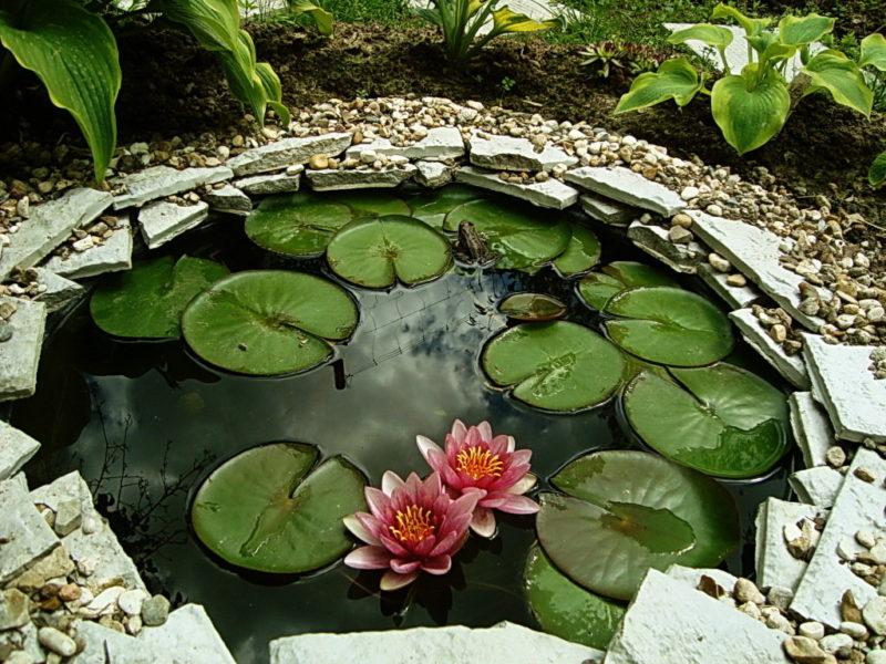 «Как сделать пруд на даче из старой ванны своими руками» фото - s1200 5 800x600