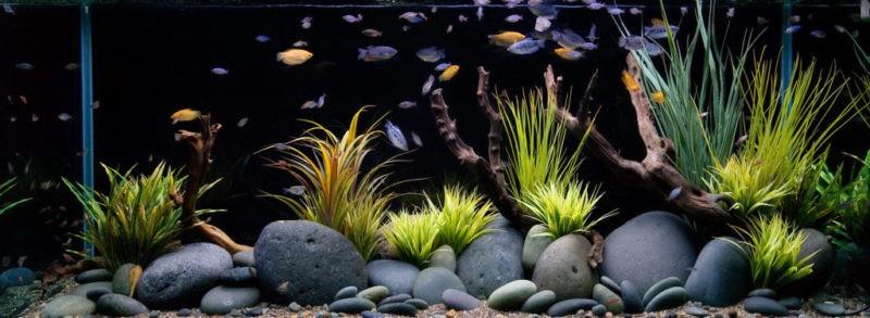«Композиция из камней в аквариуме» фото - 1 1 800x293