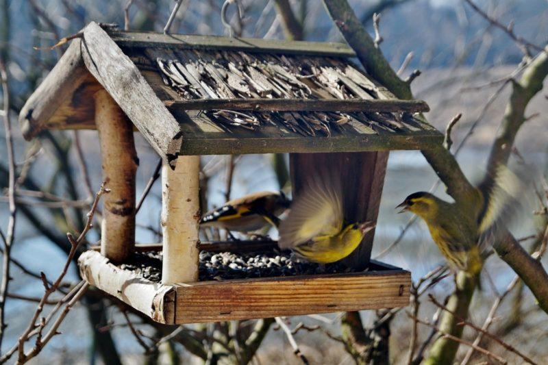 «Как сделать кормушку для птиц своими руками» фото - 1 4 800x533
