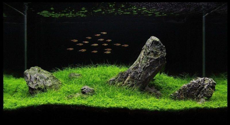 «Композиция из камней в аквариуме» фото - 10 800x436