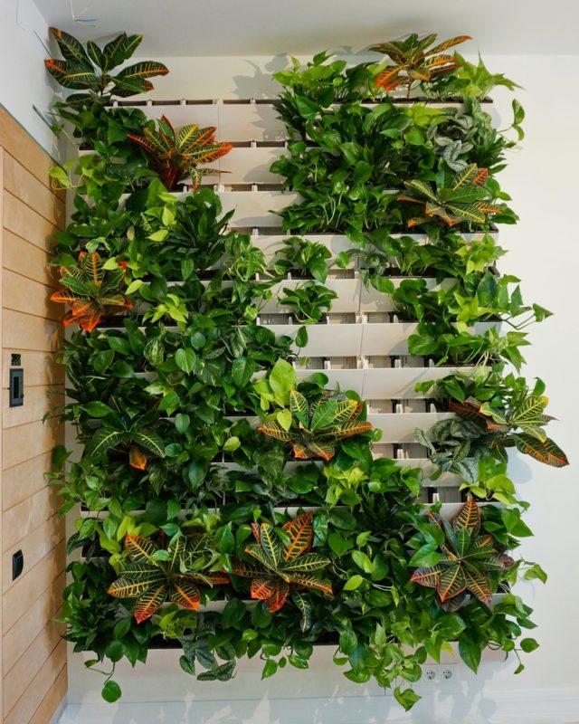 «Вертикальное озеленение в квартире своими руками» фото - 13 640x800