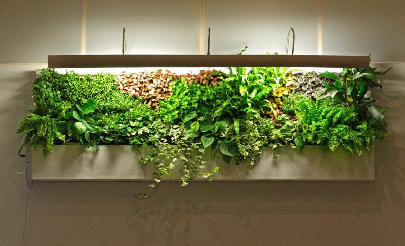 «Вертикальное озеленение в квартире своими руками» фото - 14 800x486