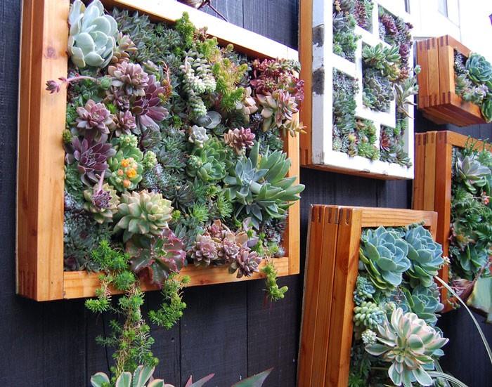 «Вертикальное озеленение в квартире своими руками» фото - 15