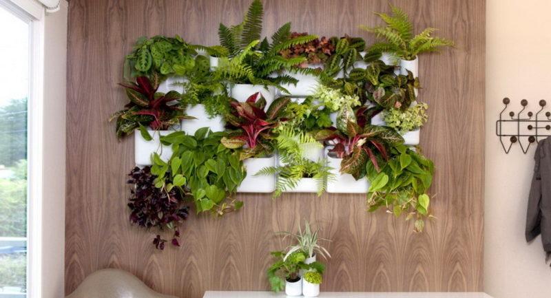 «Вертикальное озеленение в квартире своими руками» фото - 16 800x433